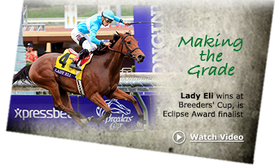 Lady Eli wins the 2014 Breeders' Cup Juvenile Fillies Turf (G1)